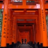 Fushim Inari-taisha torii gates with people