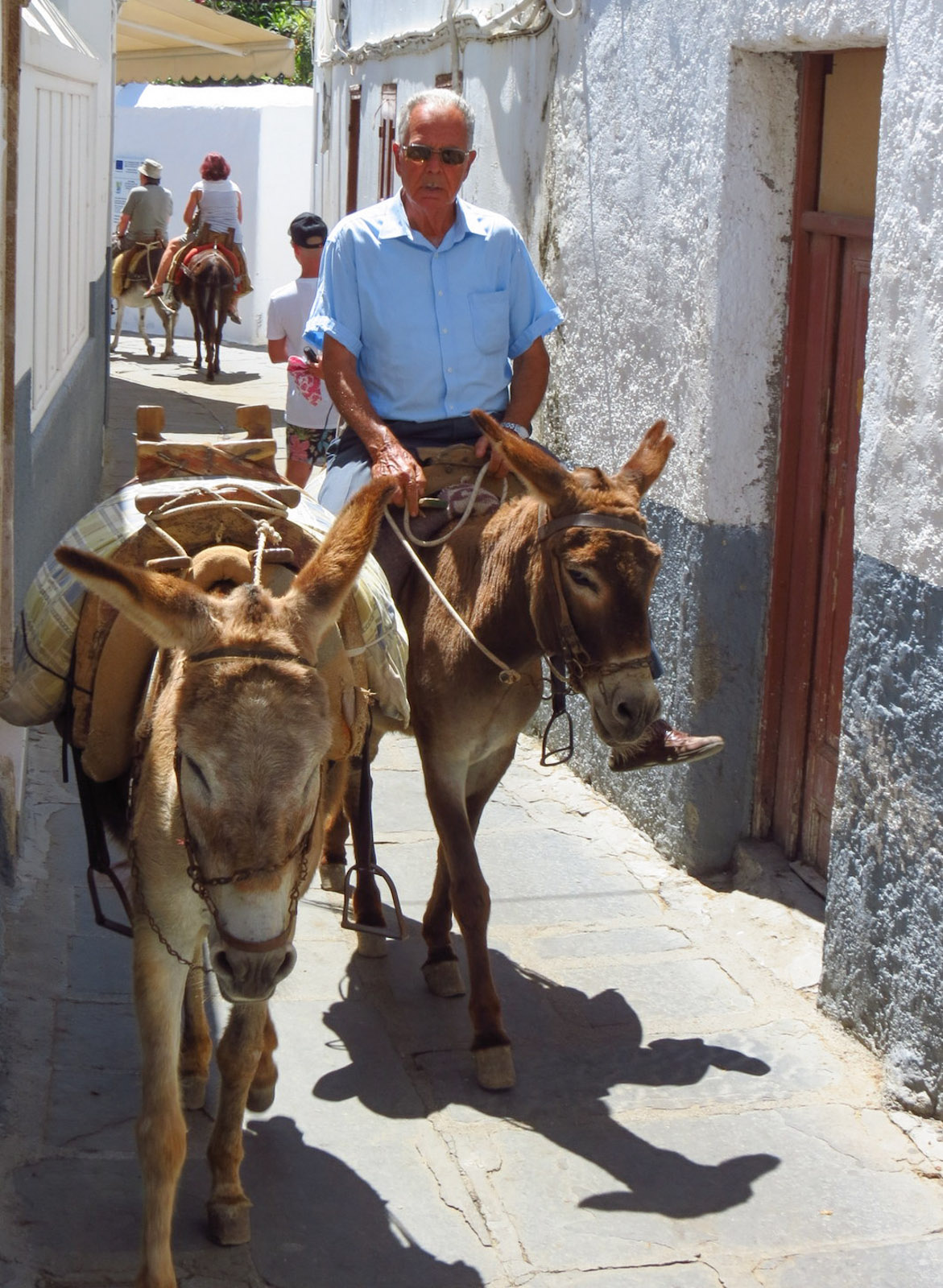 donkey-driver-in-lindos-greece