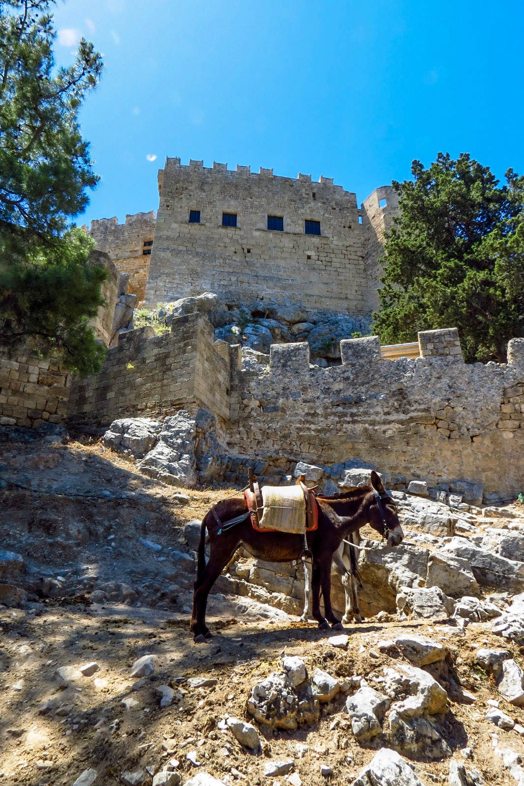 donkey-rests-by-acropolis-lindos