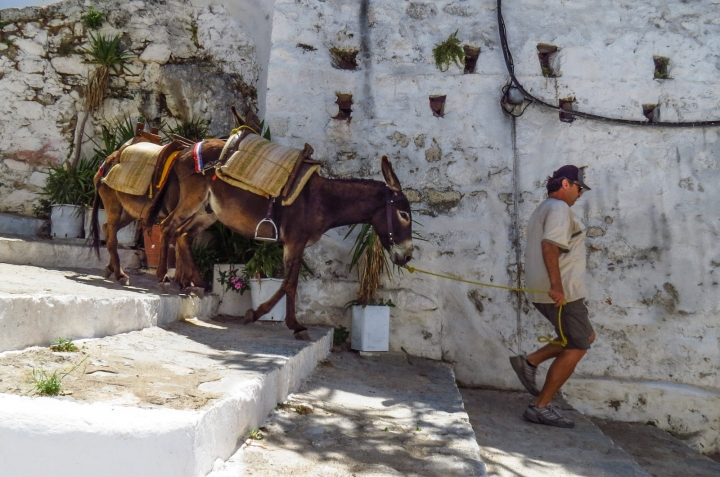 lindos-donkeys-retrurn-empty-greece