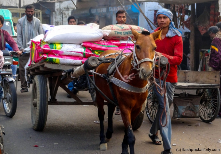 horse-and-cart-lucknow