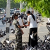 pigeons at mandalay palace