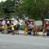 horse-carriages-manila
