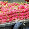 Mekong river fruit