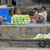 Mekong river cabbages