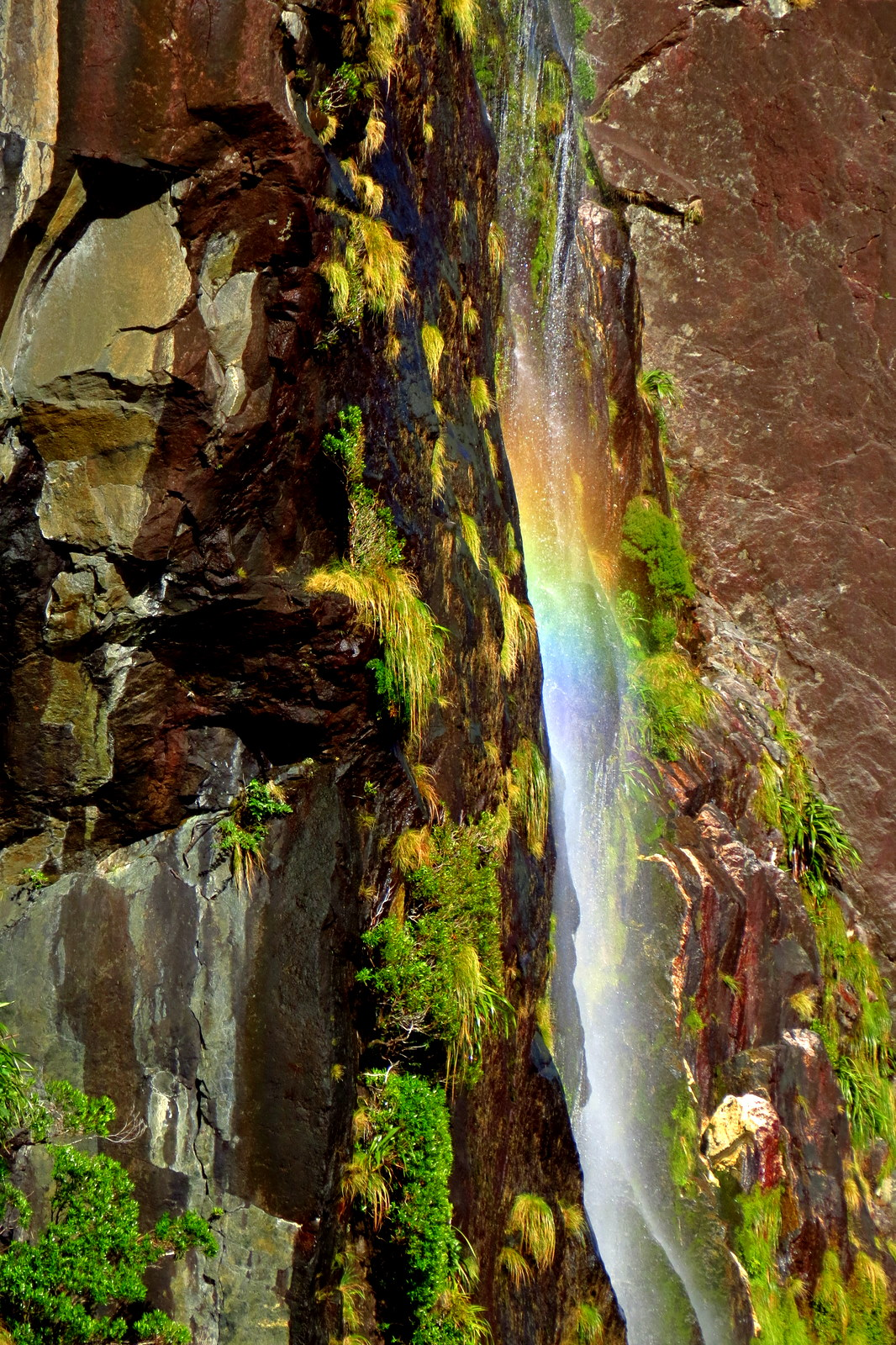 milford-sound-waterfall-rainbow