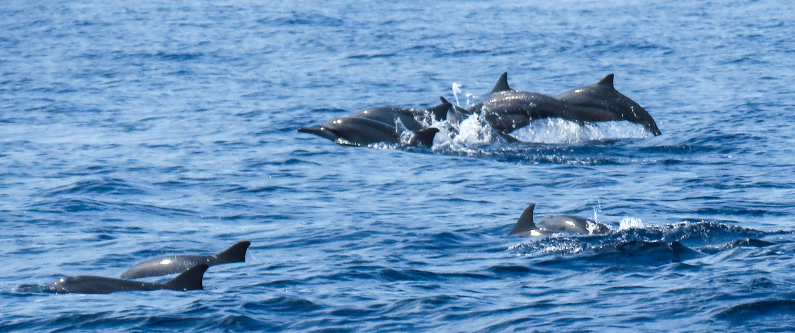 Whale Watching in Mirissa – capture these majestic mammals