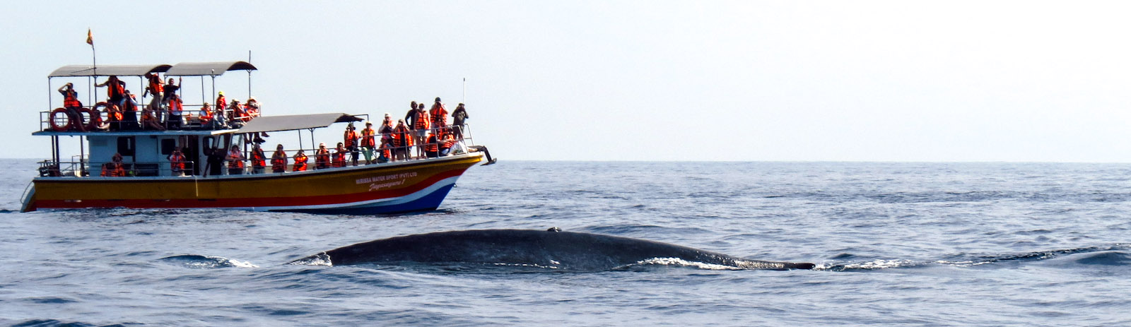 mirissa-whale-and-boat-long