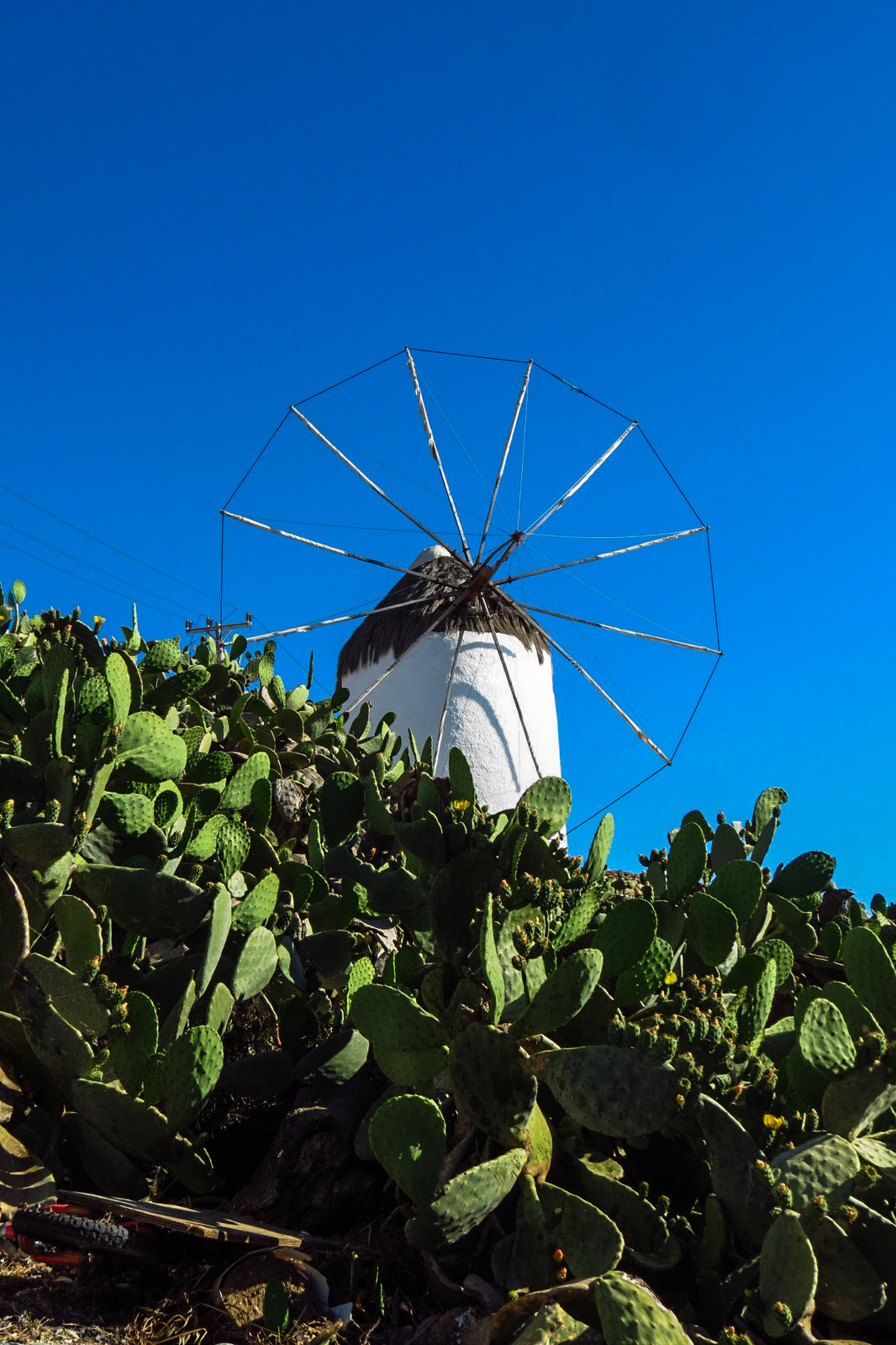 mykonos-windmill-and-cactus
