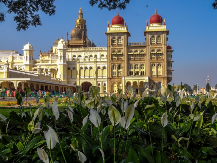 mysore-palace-and-lily-india