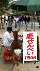 Deer check the taking Nara park