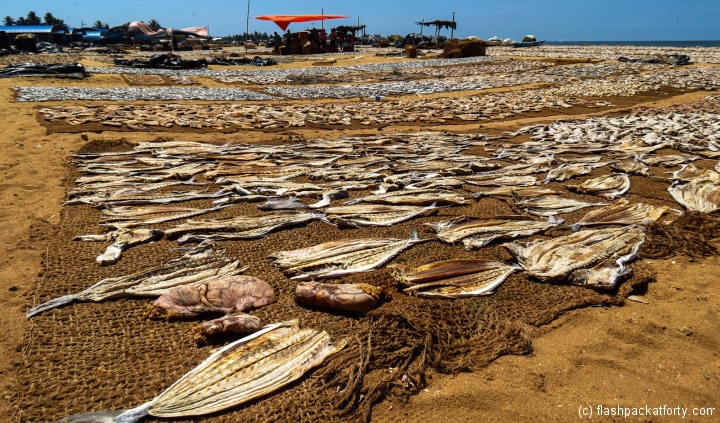 drying-fish-negombo-market