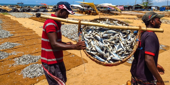 basket-of-fish-negombo-market
