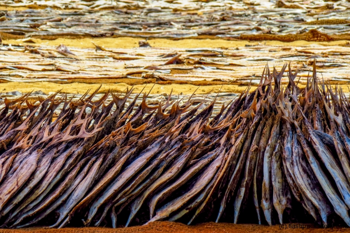 dried-fish-negombo-market