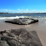 Caloundra Beach Rocks