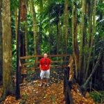 Mount Warning Forest