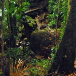 Mount Warning Rainforest