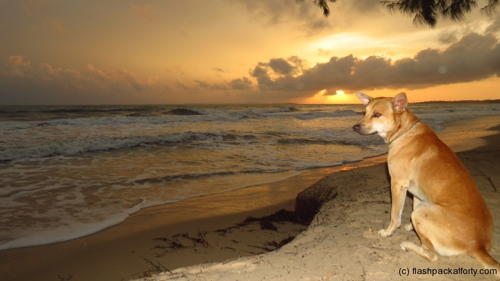 otres-sunset-and-dog