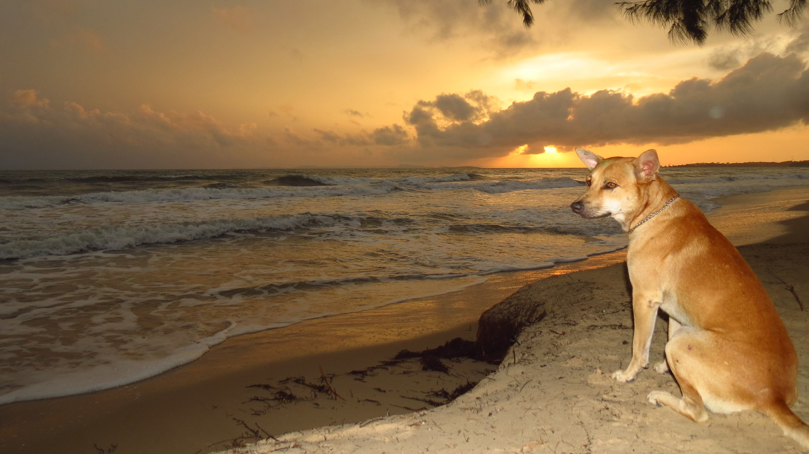 Otres sunset and dog