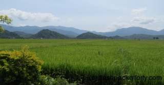 rice-fields-ilocos-norte