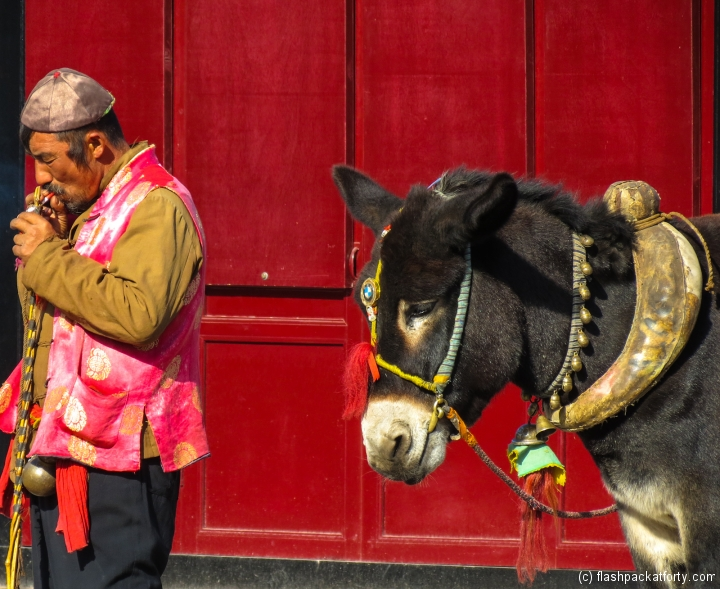 pingyao-donkey-cart-with-driver