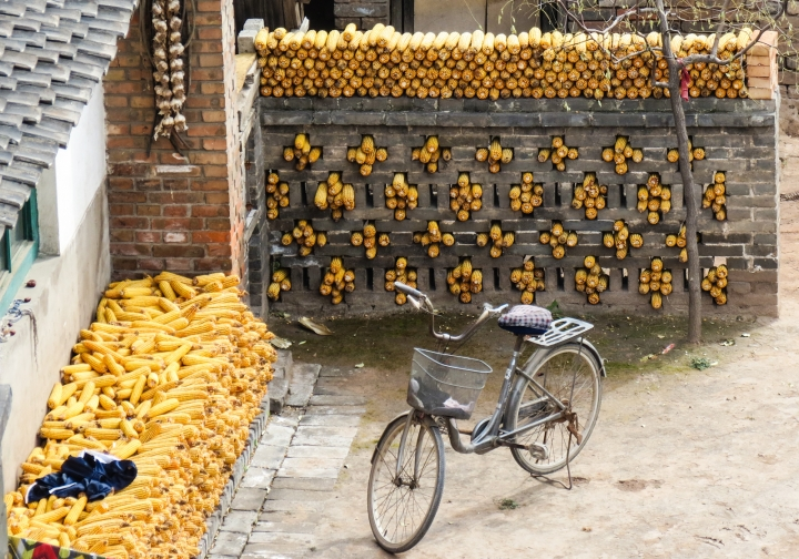 drying-sweetcorn-pingyao