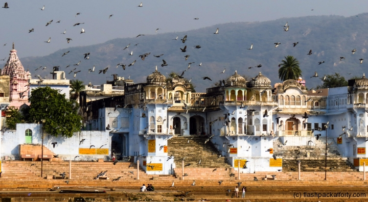 pushkar-buildings-with-pigeons