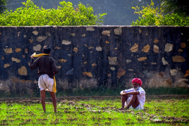 rice-workers-pushkar-india