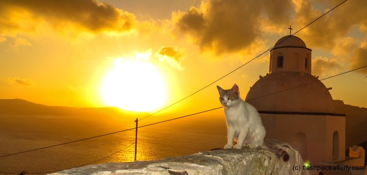 cat-santorini-sunset