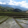 Water rice terrace