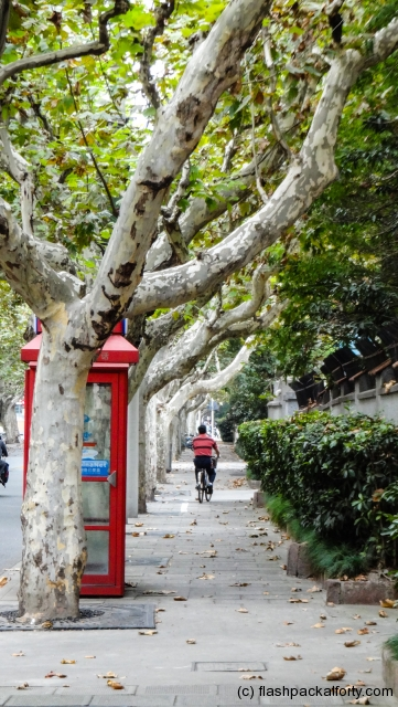 french collection tree lined street