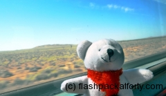 pichachu-on-the-indian-pacific