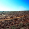 indian-pacific-view-horizon-to-nothing