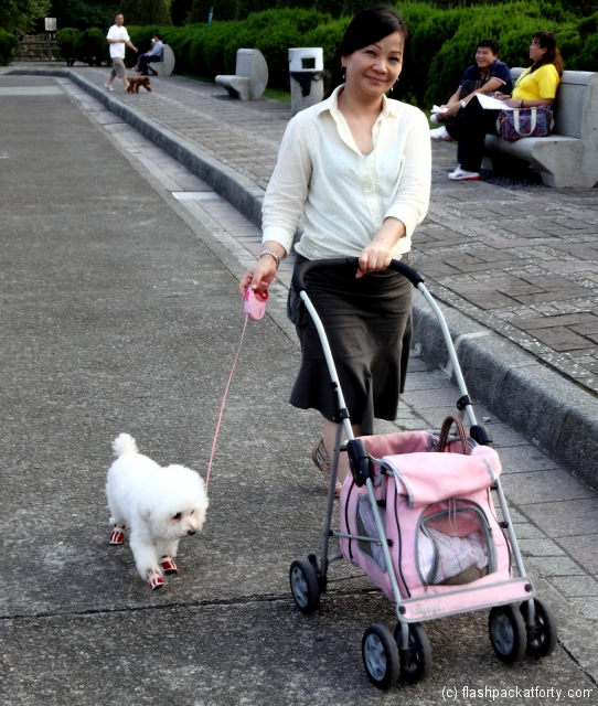 taipei-dog-dressing