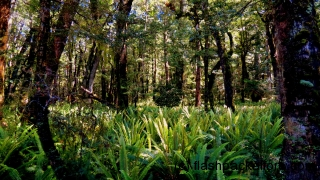 kepler-track-forest-ferns