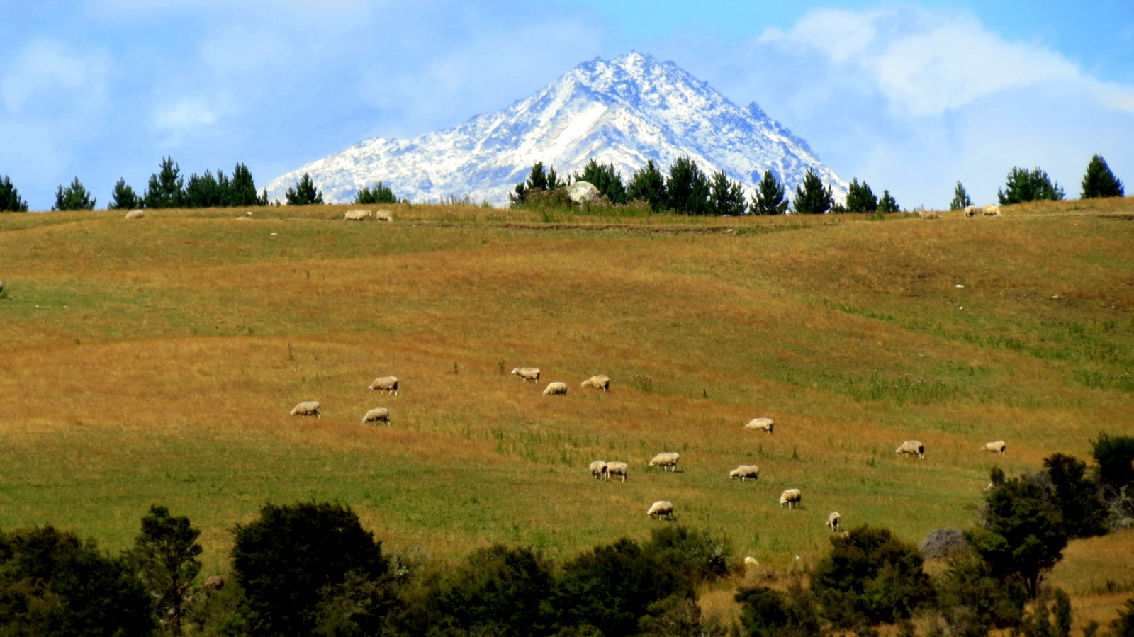 mount-and-sheep-manapoiri