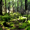 kepler-track-forest-sunlight