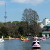 Ueno Park lake boats in blossom