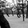 Imperial Palace Gardens trees BW