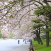 Imperial Palace Gardens blossom