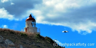 tairora-lighthouse-and-albatross