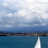 auckland-harbour-sail