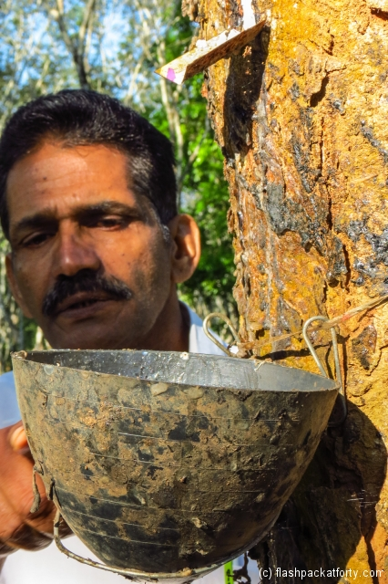 raj-and-rubber-tree-enteeveedu