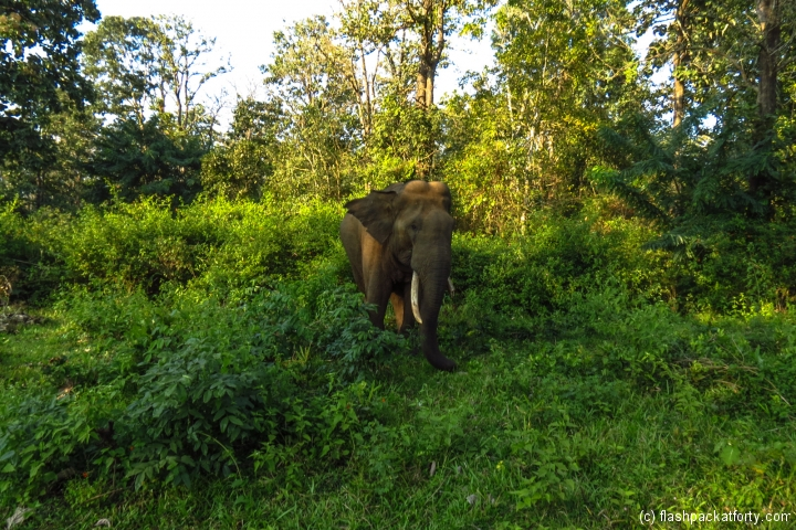 wild-elephant-wayanad-tholpetty-wildlife-sanctuary