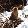 baby-snow-monkey-yudanaka-japan