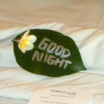 Good night written on leaf