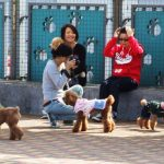 Hong Kong Dog Lovers