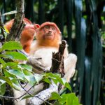 Malaysia: Jungle Trekking in Borneo at Bako National Park