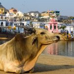 Pushkar: Not A Perfectly Peaceful Place