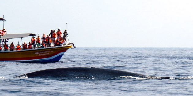 Sri Lanka: Mirissa Whale Watching
